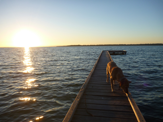 Dawn on a jetty at the Harvey Estuary, Dawesville, WA