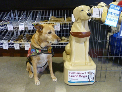 Coffee standing next to a guide dog collection statue