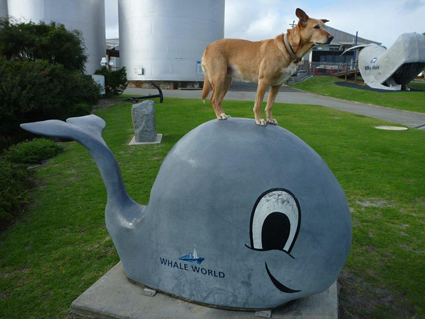 Coffee dog standing on a whale statue