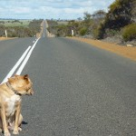 43 'That's a long stretch....' looking south of Jerramungup, WA