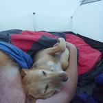 54 Happiness is a warm puppy.... Snoozing at Jerramungup, WA
